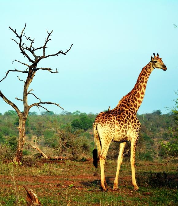 Kruger Parque